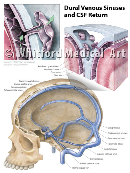 Whitford Medical Art Portfolio